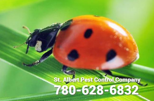 pest exterminator phone number in st albert